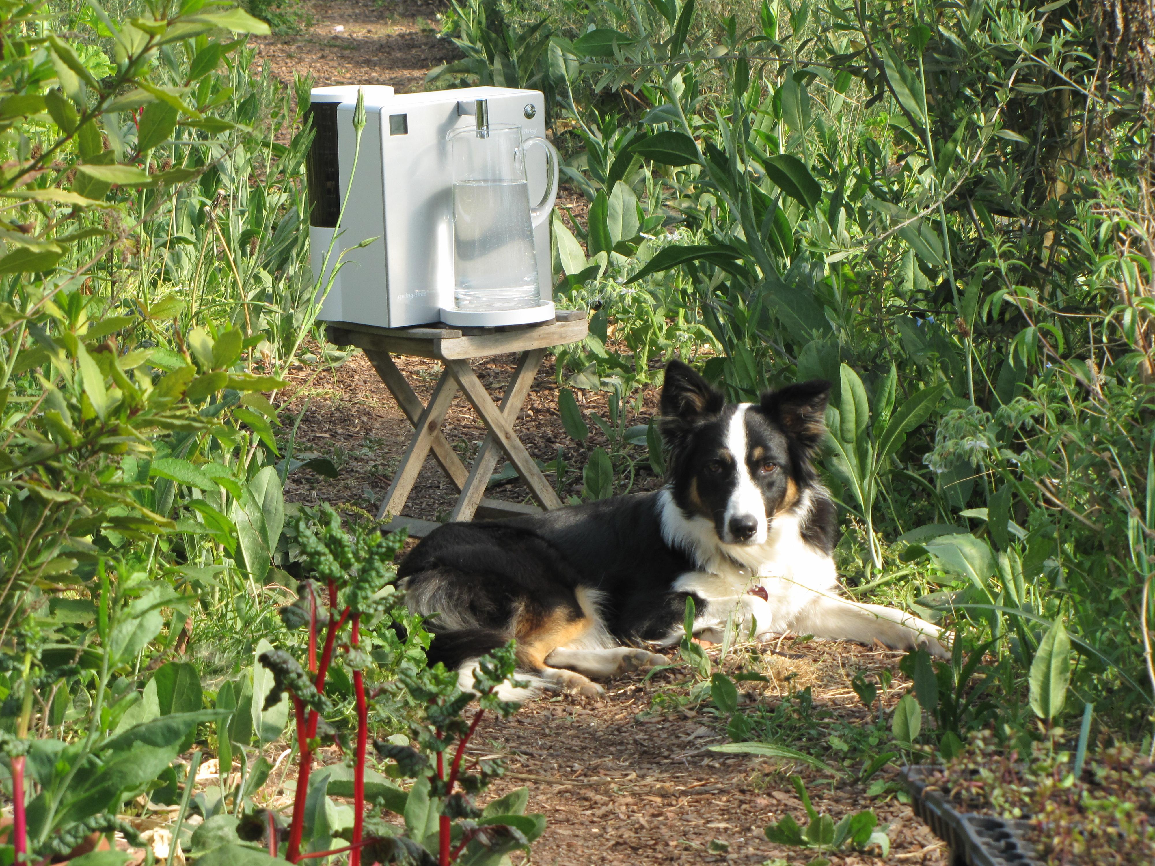spring-time Wasserfilter für gesunde Hunde